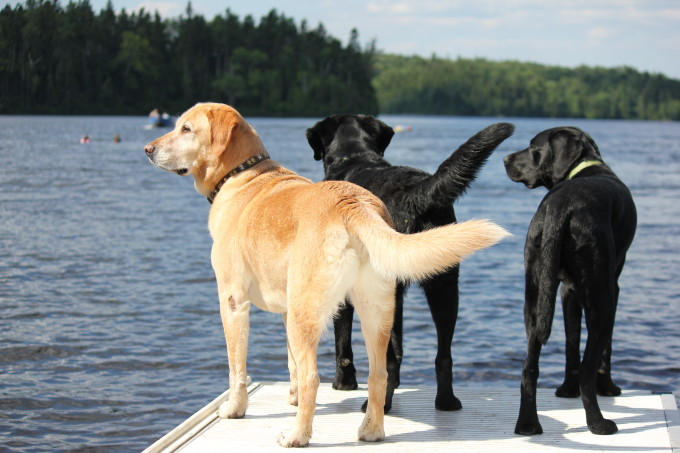Ollie, Charlie and Fonzie on the Dock in Maine